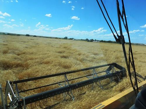 Header full of wheat