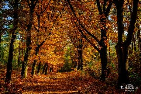 Herfstkleurenstress | Autumncolourstress