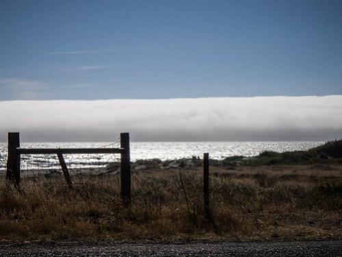 Coastal Redwoods and Fog-098