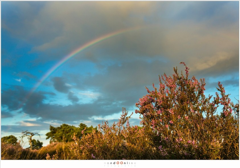 De heide met de regenboog, met groothoek