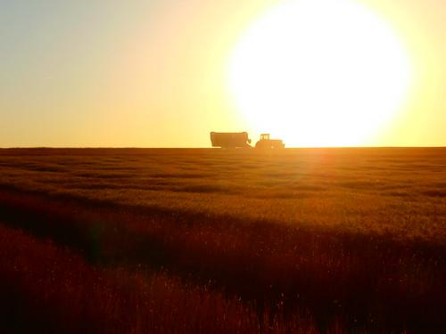 Graincart on the horizon