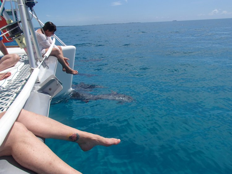 Dolphins swimming along the boat