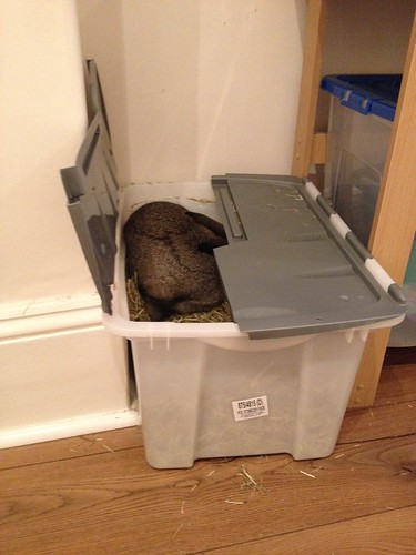 Oscar in hay box (4)
