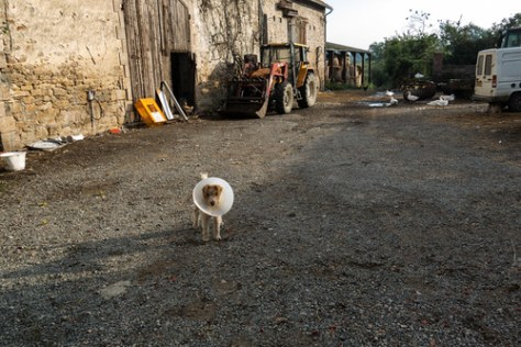 Dog in the barnyard