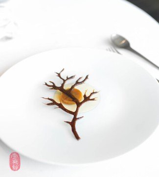 "26th Course: ""Naked Tree"""