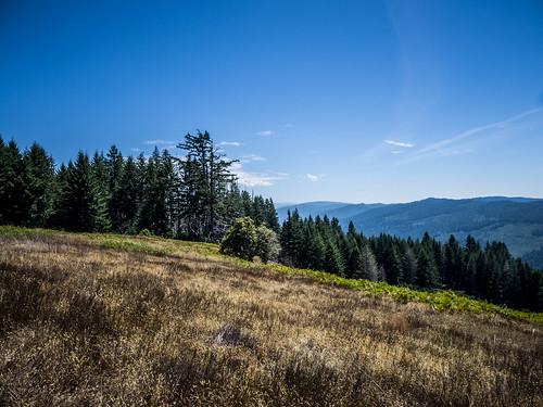 Dolason Prairie at Redwoods National Park