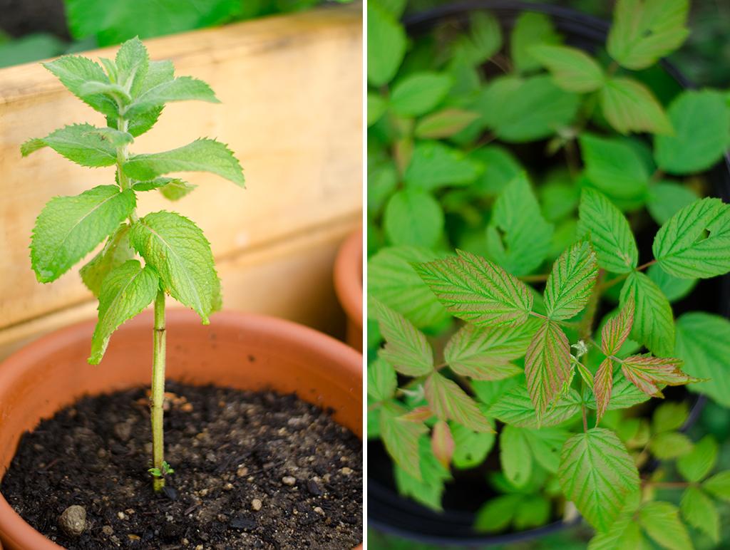 new plants collage