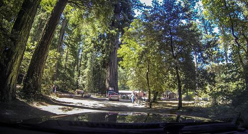 Coastal Redwoods and Fog-035