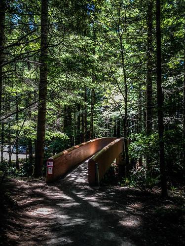Redwoods and Elk-056
