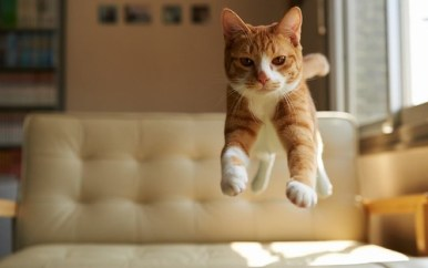Why do cats always land on their feet? cat bed jump