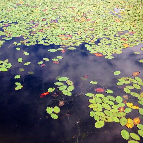 Water Plants on Kilarney Lake