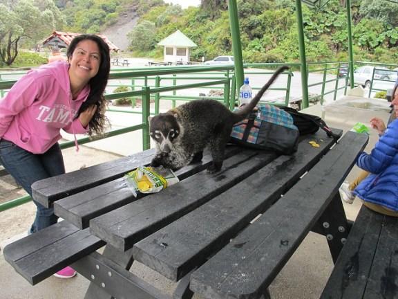 Irazu National Park wildlife Costa Rica