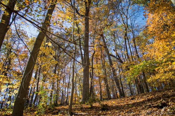 Hiking Trail During Fall Autumn in Castlewood State Park