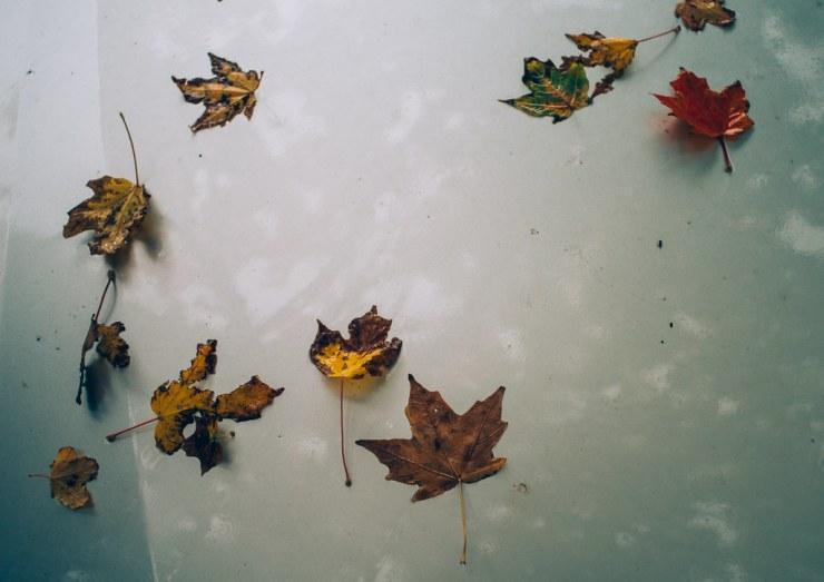 Leaves on Car