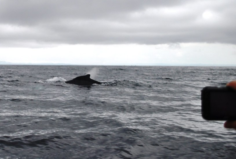 First Time I've Gone Whale Watching. What a Beautiful Experience. Samaná Bay, Dominican Republic.