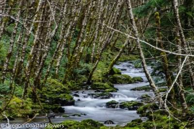 alder poles on Oregon Coast.