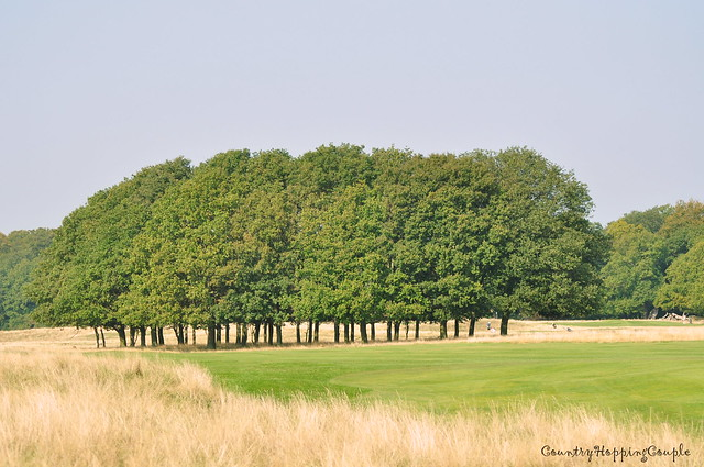 Denmark Landscape Dyrehaven Deer park
