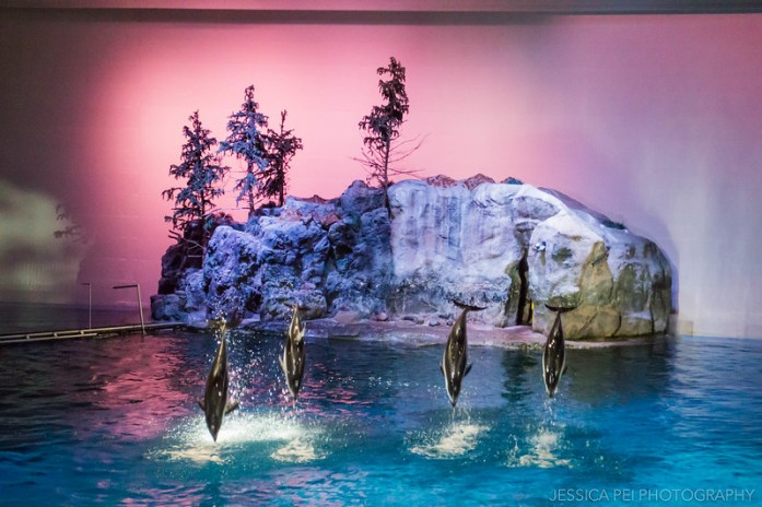 Dolphins Jumping in Shedd Aquarium Chicago Show