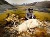 Reindeer hunter