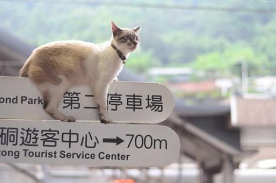 是不想下來還是下不來? | Houtong Cat Village