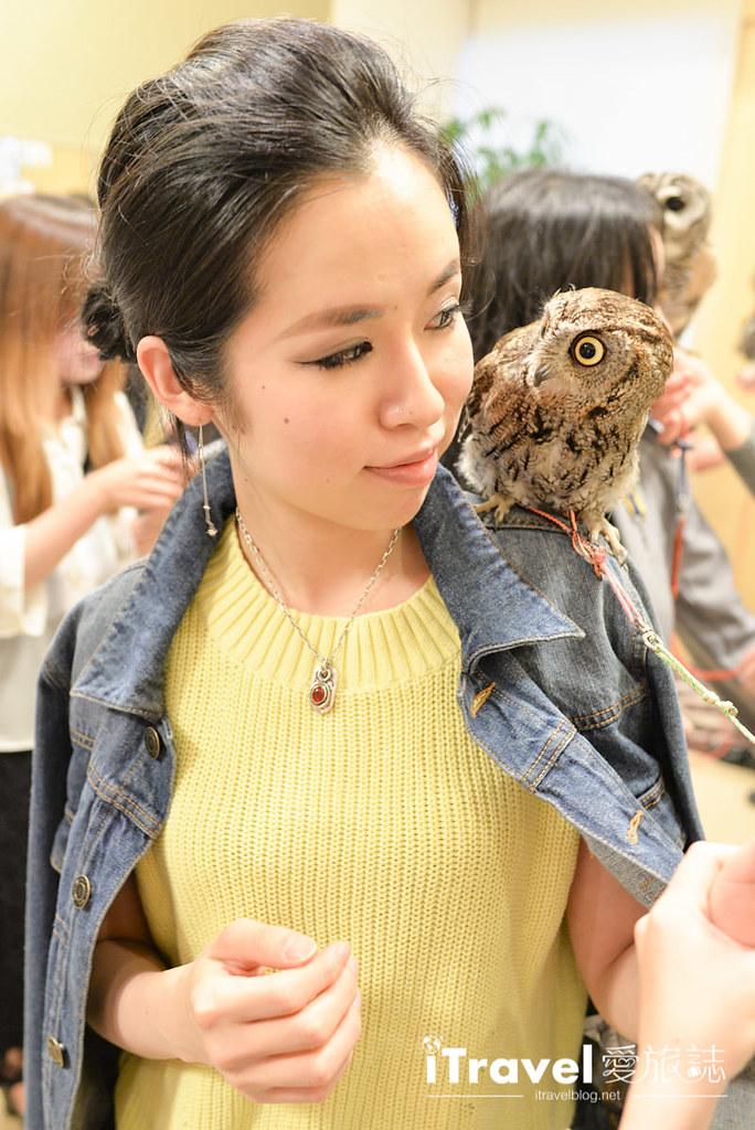 《福冈景点推荐》猫头鹰咖啡店:在线预订教学与近距离体验
