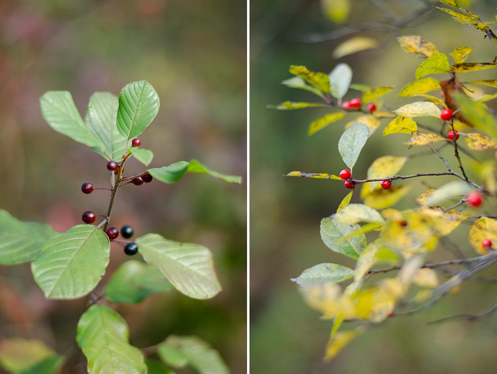 autumn berries collage