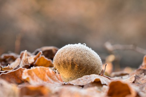 Eis Pilz - Ice mushroom-0092