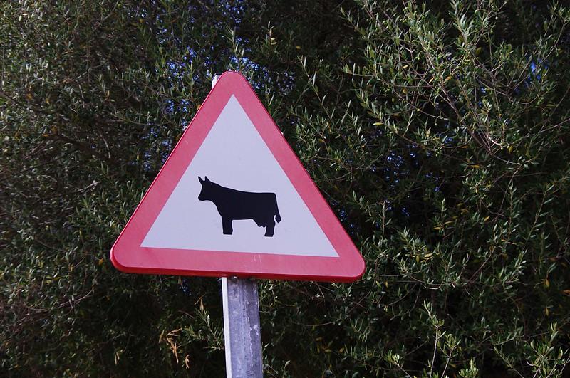 La vache en campagne