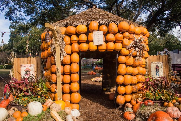 Dallas Arboretum Pumpkin Village