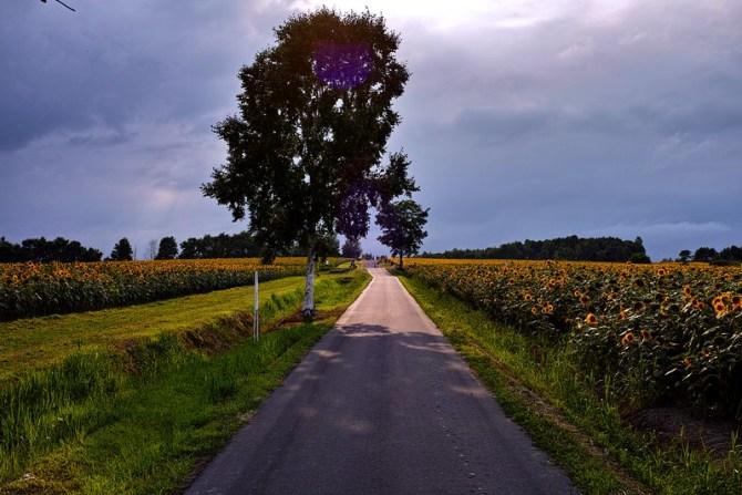Himawari Sunflowers road