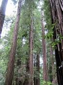 Parc de sequoias Visite en francais de la prison d'Alcatraz lors de la visite privée de San Francisco avec www.frenchescapade.com