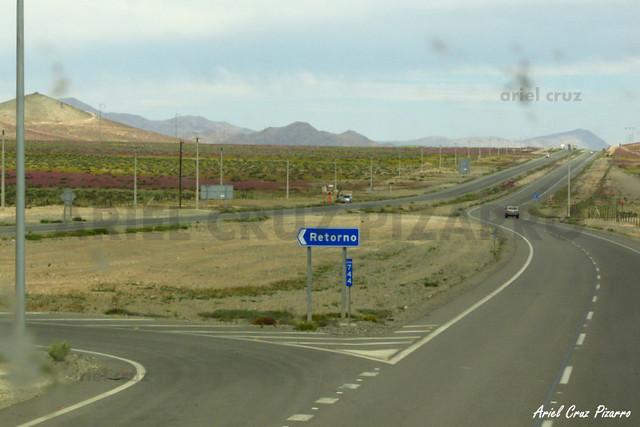 Desierto Florido - BYXP70