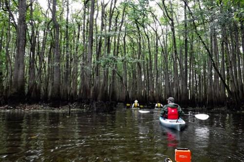 Sparkleberry Swamp with LCU-36