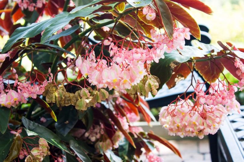 mt-cuba-gardens-pink-flowers