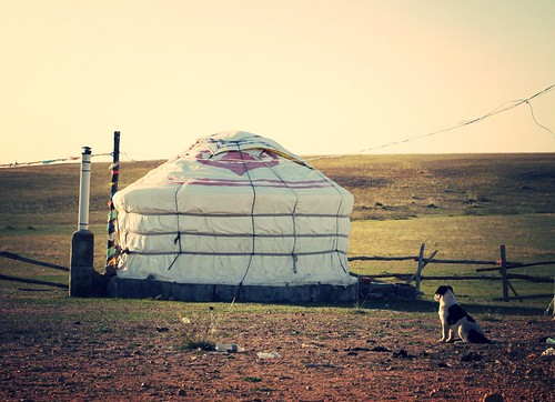 puppy and yurt