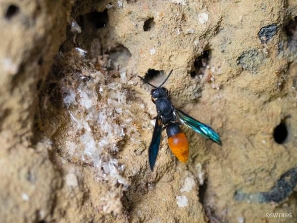 Termite Mound, Kakadu National Park