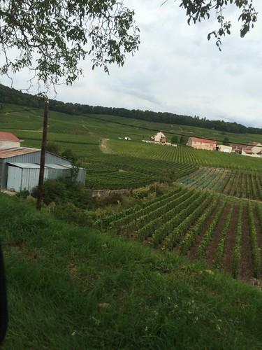 Vendanges 2015 Ière Bac pro Agroéquipements et CGEA