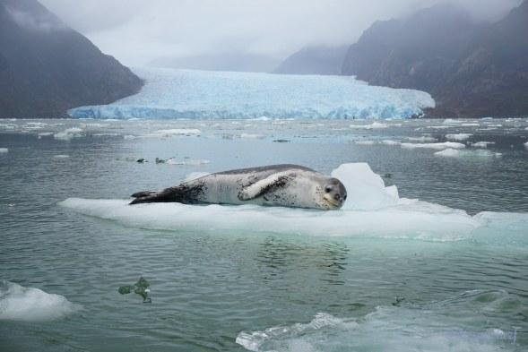 Resultado de imagen de foca leopardo san rafael