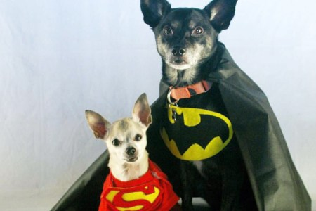 small dog halloween costume ideas top best cute dog costumes for halloween cutest halloween costumes for dogs korrectkritterscom the cutest halloween