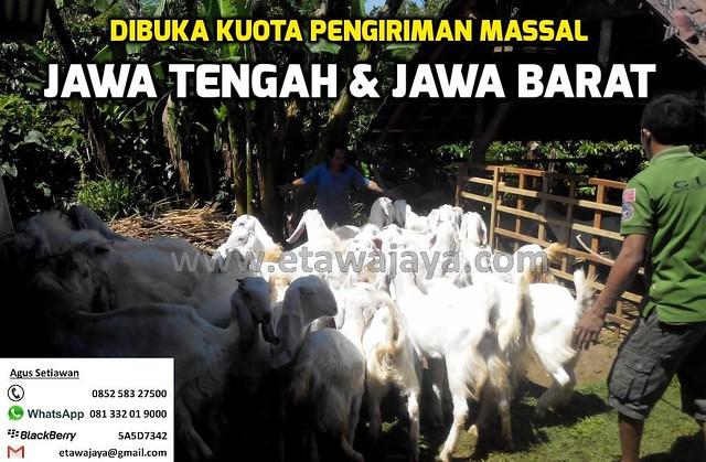 Pengiriman Massal ke Jawa Barat