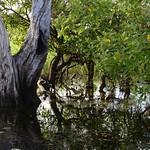 02 Viajefilos en Australia, Kakadu NP 068