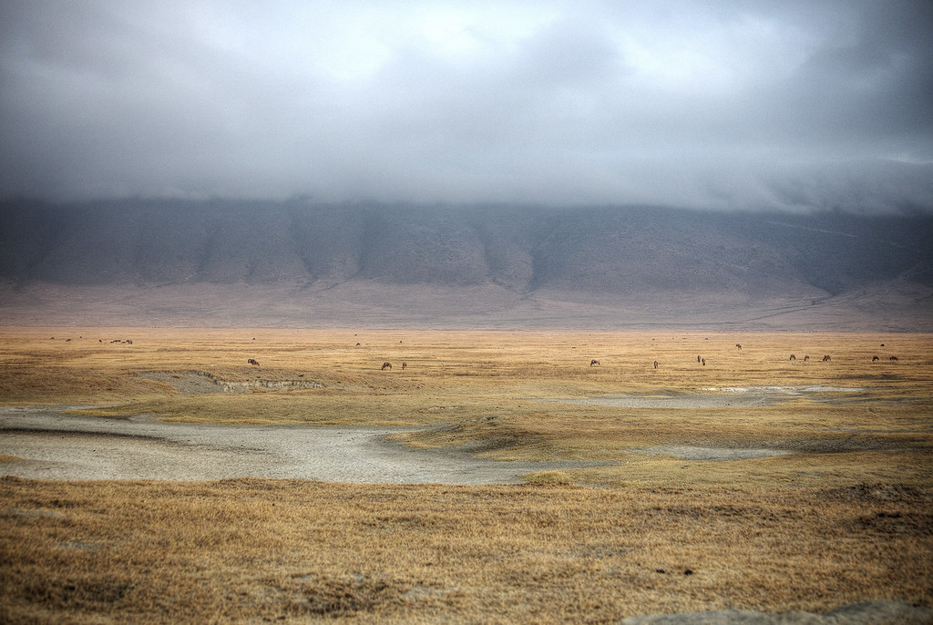 Looking around in Ngorongoro Crater.