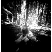 Forest Girl - A Limerick