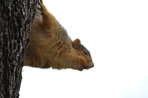 Squirrel in a Tree Trunk