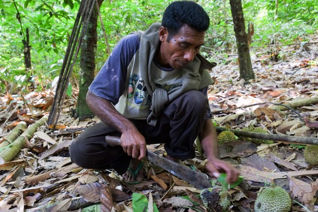 Machete meets durian. Sawai, Pulau Seram