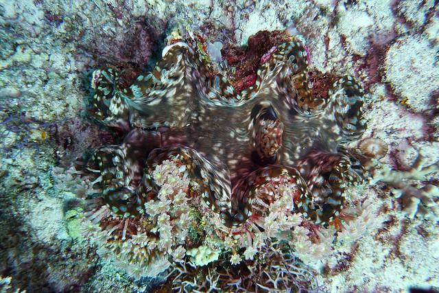 Scuba Diving in Honda Bay