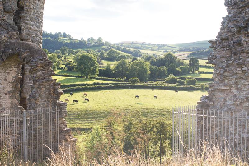 10 clun castle frame cows