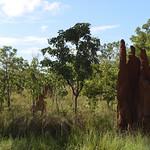02 Viajefilos en Australia, Kakadu NP 123