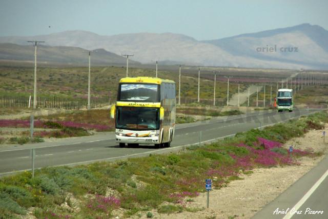 Atacama Vip - Desierto Florido - Marcopolo Paradiso 1800 DD / Volvo (CKPZ62) (2124)