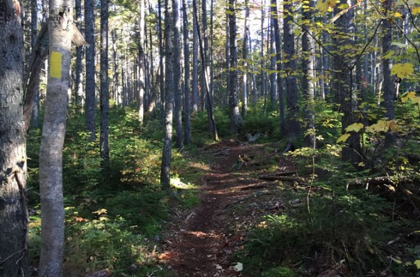 Cedar Brook Trail Relocation
